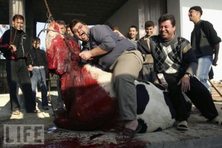halal-slaughter