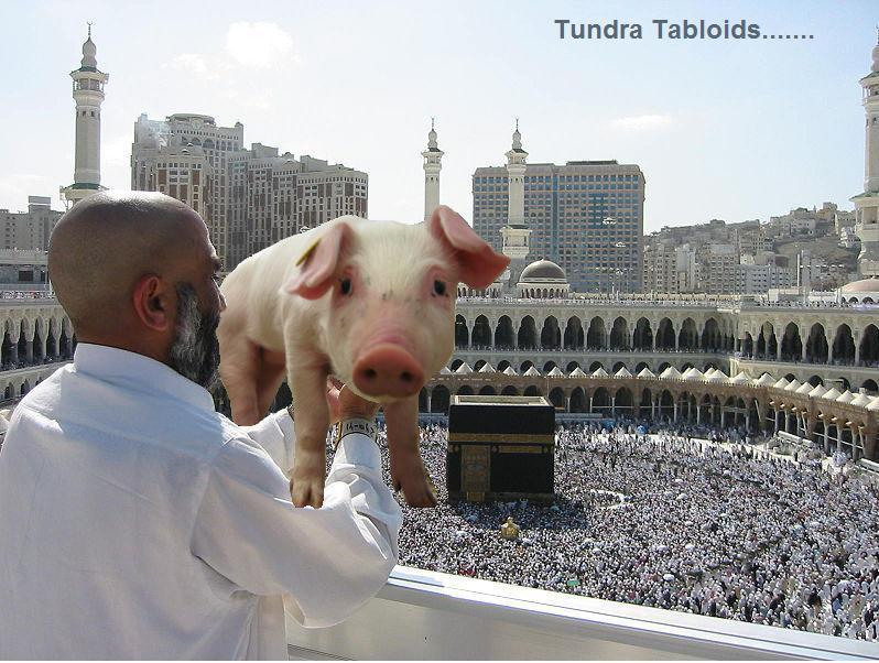 mecca pig