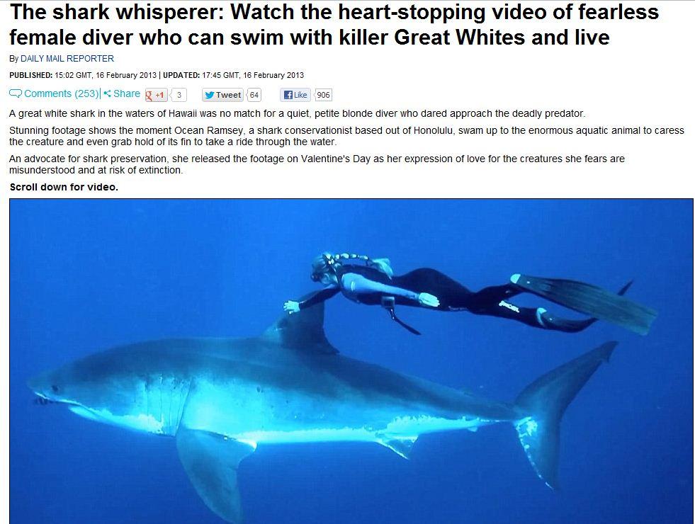 shark whisperer 17.2.2013