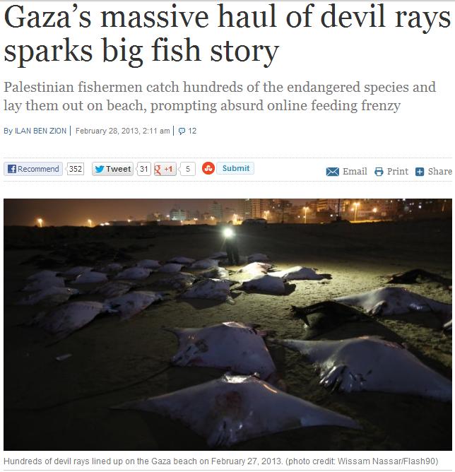 devil rays on a tard beach1.3.2013