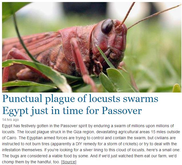 egypt locusts 4.3.2013