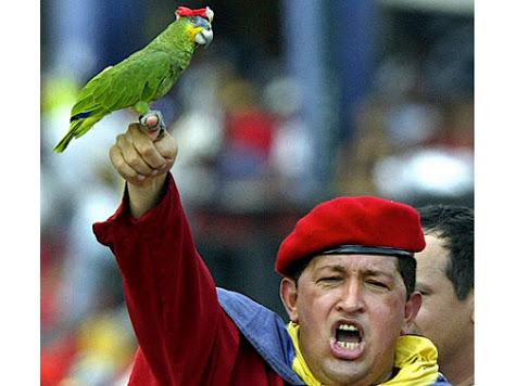 hugo-chavez-parrot
