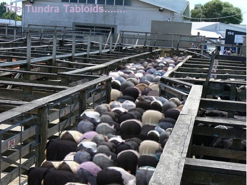 muslim cattle