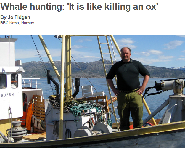 NORWAY - WHALE HUNTING LIKE KILLING AN OX 16.7.2013