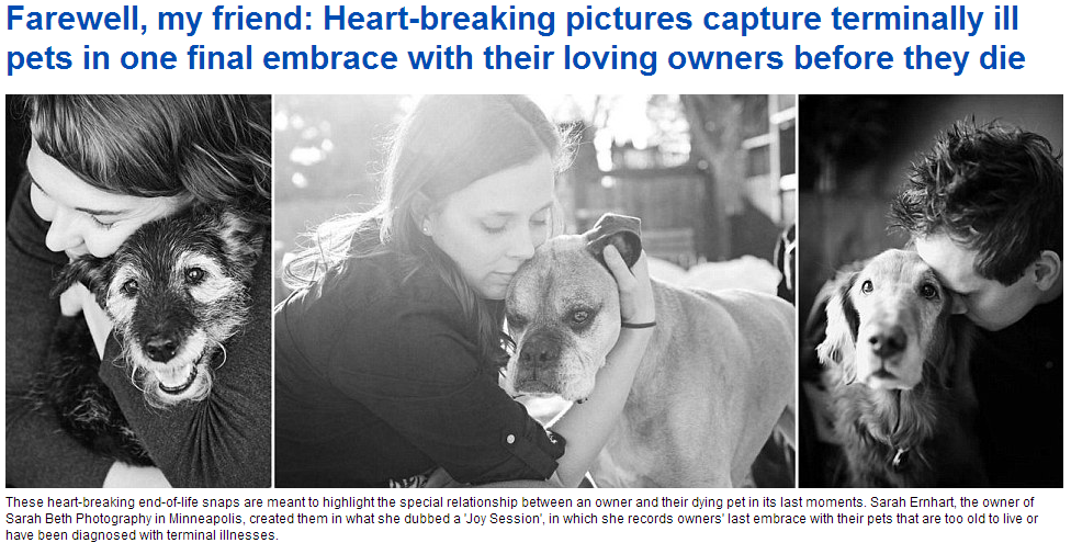 heartbreaking farewells to our furry loved ones