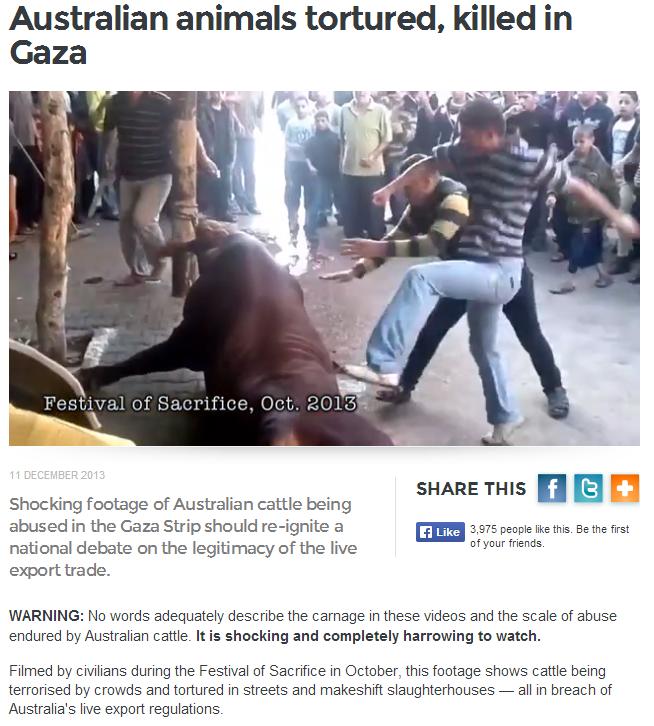 australian cattle in gaza brutally butchered 13.12.2013