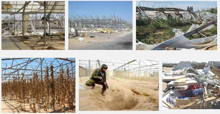 HAMAS DESTROYED GREEN HOUSES IN GAZA