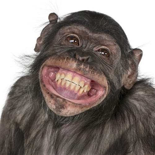 smiling-monkey-faces-gbrhxwtt-e1392573968105